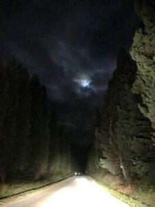 viale-bolgheri-notte-luna